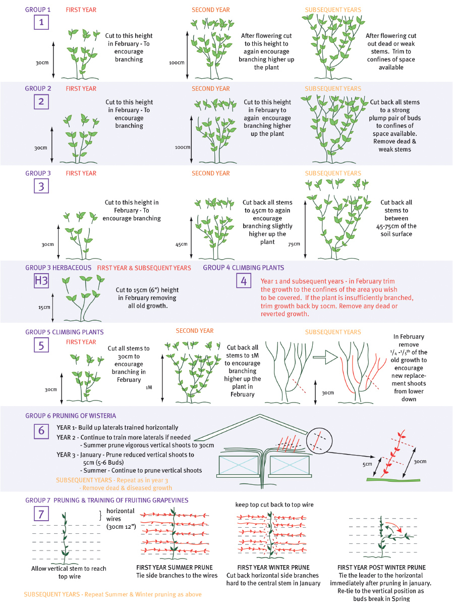 Pruning Instructions